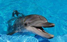 Animales Marinos | Los animales marinos