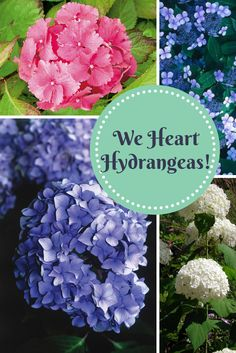 11 Hydrangea Varieties To Add To Your Landscape --> http://www.hgtvgardens.com/photos/flowering-plants-photos/hydrangea-palooza-11-photos-of-these-perennial-charmers?soc=pinterest