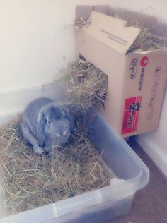 DIY hay rack - Rabbits United Forum. this is the easiest thing ever!