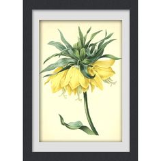 Flower Print 21, Sale item, produced from a vintage botanical illustration, 8x11 wall art.