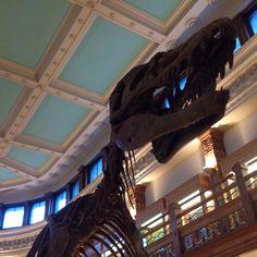자연사 박물관의 예쁜 버젼