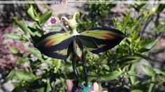 alas de mariposa Moth, Insects, Plants, Animals, Fairy Wings, Butterfly Wings, Butterflies, How To Make, Female