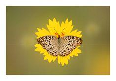 || Flower Power || by Iru Sai on 500px