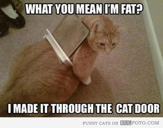 I'm no fatty! Wonderif this is what goes through Trixie's head @Shanna Nowosielski