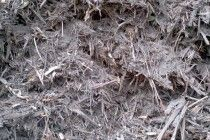 Tree mulching service in Gold Coast and NSW