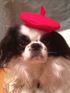 Red Dog Beret Dog Hat Valentine's Day Various Sizes by Doginafez