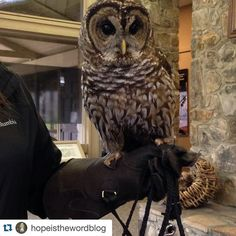 Thanks!!! ------- #Repost @hopeisthewordblog with @repostapp.  Coosa the barred owl @alabamawildlifecenter