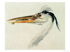 Joseph Mallord William Turner Heron with a Fish Art Print for sale. Transform your space with nice Heron with a Fish Art Print at payable price. Joseph Mallord William Turner, Fish Wall Art, Fish Art, Leeds Art Gallery, Gallery Wall, Reproduction, Stretched Canvas Prints, A4 Poster, Art Images
