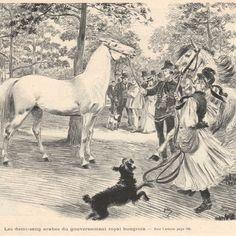 Exposition internationale hippique a Vincennes - Chevaux - Gravure presse 1900