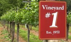 The Yadkin Valley just west of Winston-Salem is a designated wine region featuring more than 30 wineries.