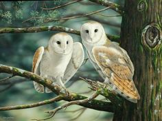 Google Image Result for http://animal-globe.com/wp-content/uploads/2011/07/Barn-Owls-on-the-trees.jpg