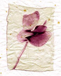 Polaroid emulsion Lift on Mulberry gold fleck paper artist - cherise