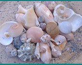 Unique Sea Shells