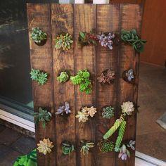 Vertical succulent Garden- made from a wooden wine rack! DIY💜