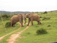 Addo Elephant Park  in South Africa