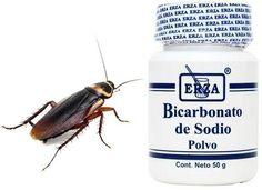 9 Ideas De Eliminar Las Cucarachas Cucarachas Recorte De Pelo Limpieza Del Hogar