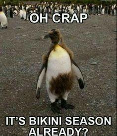 Somebody needs a bikini wax!