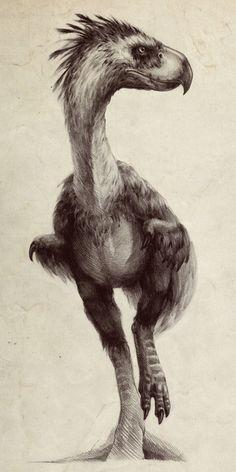 "paleoillustration:    Phorusrhacos ""Terror bird"" byAntarctic Spring"
