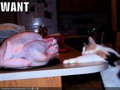 Clawless cat vs. flightless bird: Who will win the neverending battle?