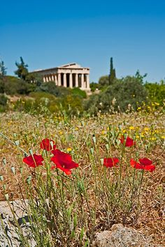 """""""Springtime""""  The Temple of Hephaestus, also known as the Theseion, is the best-preserved ancient Greek temple and it remains standing largely as built. It is a Doric peripteral temple, and is located at the north-west side of the Agora of Athens. It was officially inaugurated in 416-415 BC.  Temple of Hephaestus (Theseion), Agora of Athens, Greece, Europe  Nikon D700, Nikkor 24-85 mm at 66 mm, 1/60 sec at f/ 22, ISO 200  © Konstantinos Arvanitopoulos Photography. All Rights Reserved."""