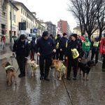 Anche i cani della Protezione Civile alla Stramilano