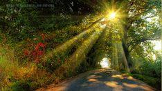 Анимация - солнце, лучи, природа
