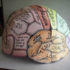 Brain Hemisphere Hat (Made of Paper)