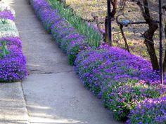 Sidewalk, Cottage, Landscape, Flowers, Gardening, Gardens, Tips, Scenery, Side Walkway