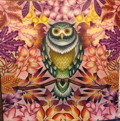 secret garden johanna basford inspiration for coloring owl - Hľadať Googlom