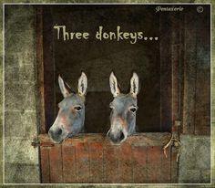 Three donkeys...