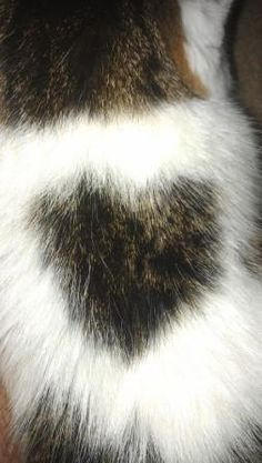 My Montego wears his heart on his back! :)  #cat #heart #love