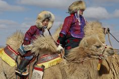 A child rides a camel during 'Temeenii bayar', the Camel Festival, in Dalanzadgad, Umnugobi aimag, Mongolia, March 6, 2016. On the steppes of the Gobi Desert, the crowd urges on Bactrian camels laden down with all that's needed to build and live in a traditional Mongolian tent. Guinness World Records classes the 15 km race thatÃs part of the two-day festival as the largest camel race in the world, drawing 1,108 participants. The winning camel romped home in 35 minutes and...