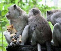 monkeys and kitten