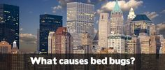 Learn about what causes bed bugs, and what you can do to avoid them!