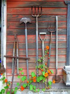 Old tools as shed decoration & trellis