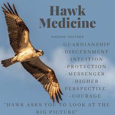 Hawk Spirit Animal, Spirit Animal Totem, Animal Spirit Guides, Your Spirit Animal, Animal Totems, Spirit Meaning, Animal Symbolism