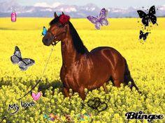 cavallo in un campo di fiori