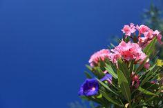¡Cuidado! Las plantas más venenosas del mundo son...