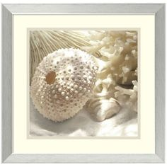 ''Coral Shell I'' Framed Wall Art ($129) ❤ liked on Polyvore featuring home, home decor, wall art, silver, beach home decor, coral home decor, coral home accessories, coral wall art and beach scene wall art