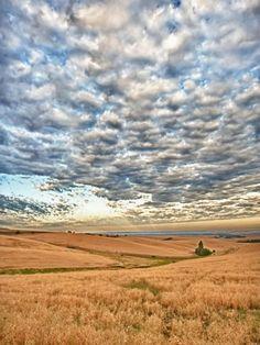 Walla Walla, Washington wheat fields by Richard Duval: (Walla Walla... so nice, we named it twice!)