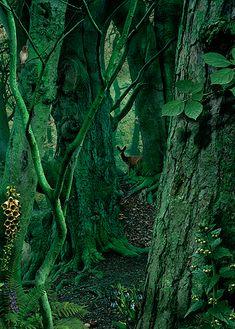 study in green #1   foto: ruud van empel