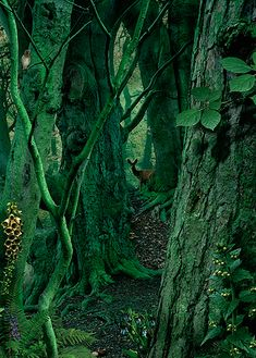 Study in Green #1 | foto: Ruud van Empel