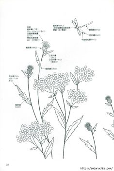 """Photo from album """"Wild Flower Embroidery Totsuka"""" on Yandex. Herb Embroidery, Hand Embroidery Patterns, Ribbon Embroidery, Embroidery Stitches, Embroidery Designs, Embroidery Books, Rug Hooking Patterns, Japanese Books, Close Image"""