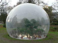 greenhouse bubble