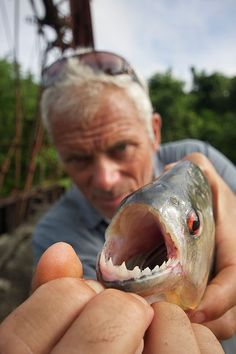 River Monsters piranha, do you remember when he jumped into a river full of piranhas?