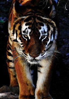 Fractalius Bengal Tiger art