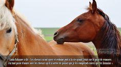 Linda Kohanov à dit « Les chevaux m'ont sauvé et redonné goût à la vie quand j'étais sur le point de renoncer. J'ai tant passé d'année avec les chevaux qu'il m'arrive de penser que je les comprends mieux que les humains ».