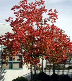 Thinking of growing deciduous trees? Trees For Front Yard, Front Yards, Back Garden Design, Plant Images, Deciduous Trees, Plant Species, Back Gardens, Trees To Plant, Beautiful Gardens