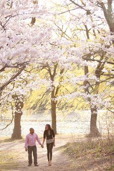 Cherry Blossom Engagement Session in High Park | Toronto Wedding Photographer | Jennifer Klementti Photography | Fine Art Wedding Photographer | Lifestyle & Portrait Photographer | Toronto, Muskoka, Barrie, International