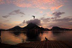 Pássaros voam às margens da Lagoa, no RJ - Brasil. Foto: Fernando Quevedo / Agência O Globo Infoglobo